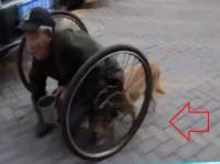 dog pushing disabled man in wheelchair